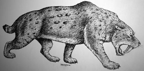 Smilodon fatalis (reconstruction of the saber-toothed tiger) (Late Pleistocene; California, USA) 1 | by James St. John