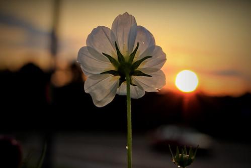 sunrise ngc august cosmos atlanticcityexpressway canonefs60mmmacrousm canoneos70d