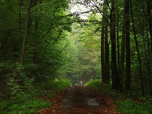road trees light summer mist green nature rain fog forest landscape path poland polska lodzkie rogów łódzkie
