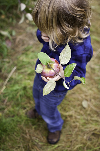 Apples at Atkins | by Massachusetts Office of Travel & Tourism
