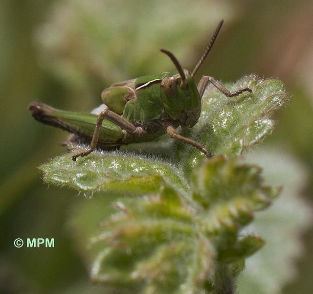 Grasshopper 2015