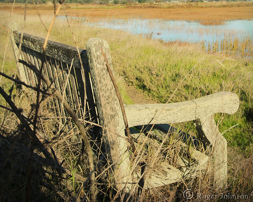 sliderssunday bench weatheredbench hightide cortemaderamarsh sanfranciscobay marsh wetlands rogerjohnson