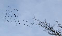 birds vs tree