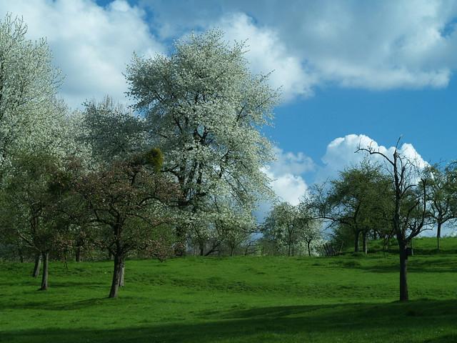 Zammelen boomgaard
