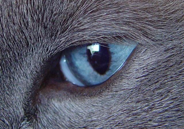 20050511 Howard's Eye
