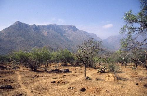 india landscape dry western 1998 tamil nadu ghats mudumalai scenicsnotjustlandscapes