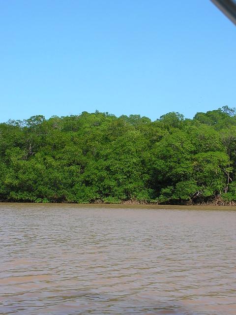 Manguezal, Delta do Parnaíba