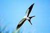 Kite with prey by Au13J
