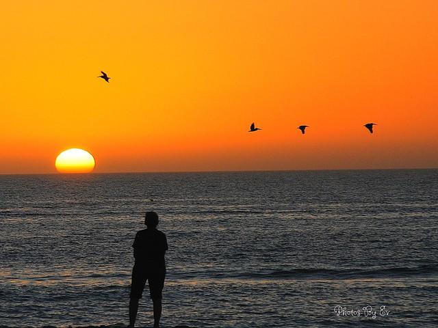 Venice Beach Wonder