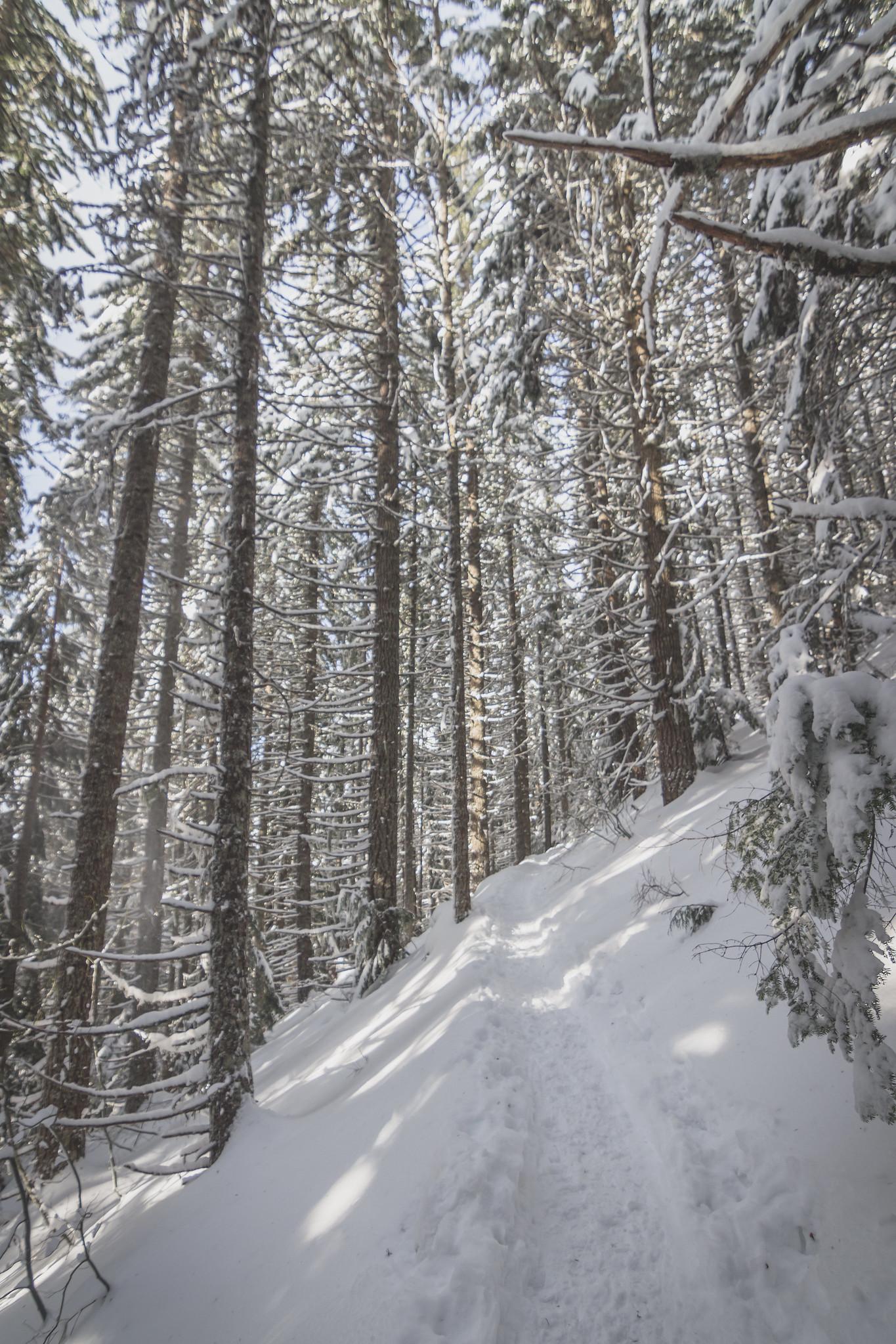 Pratt Lake Trail