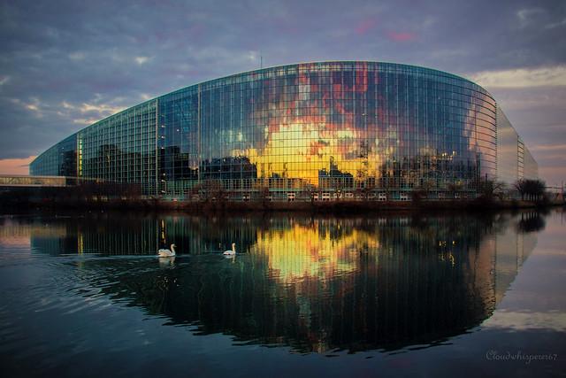 2 swans mesmerized by the dawn - Strasbourg European Parliament