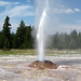 Pink Cone Geyser (Pink Cone Group, Lower Geyser Basin, Yellowstone Hotspot Volcano, nw Wyoming, USA)