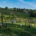 Les moutons de Jon et Amber entretiennent la pelouse du verger. Près de Narbeth, Pembrokeshire, pays de Galles, Royaume-Uni.