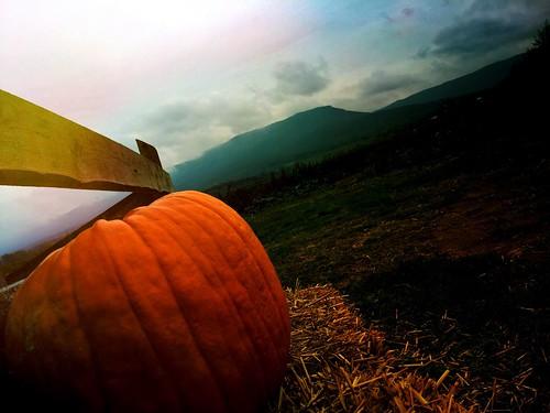 rural pumpkin va mtjackson thegreatpumpkin route11 mountjacksonva iphonography