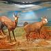 Macedonia, Greece, wild goats, Paranesti natural history museum, Drama regional unit by Macedonia Travel & News