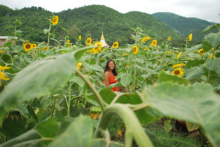 Sunflower Myanmar | by wearesolesisters.com