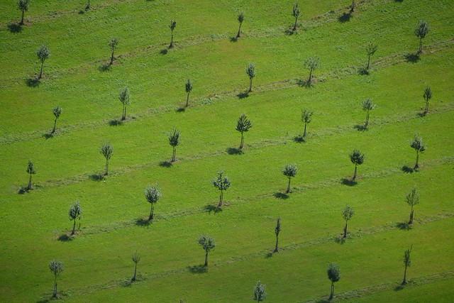 Schachbrett mit Bäume