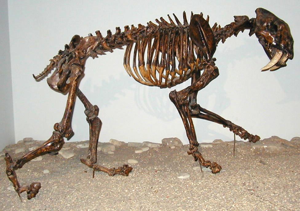 Afbeeldingsresultaat voor smilodon