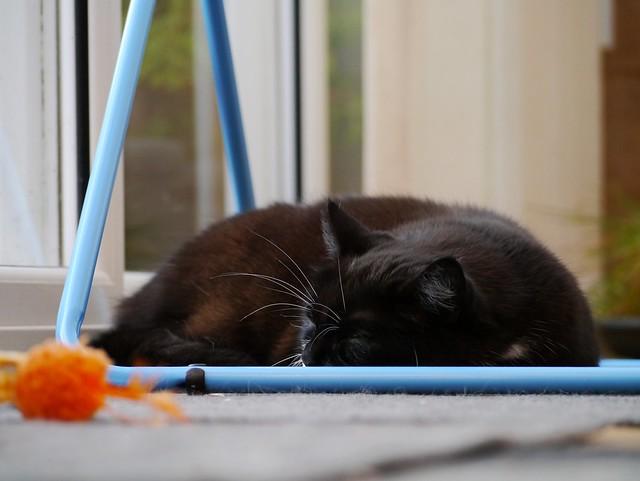 Sleepy Tuzz....