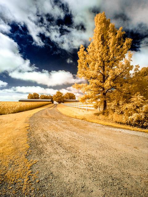 Golden Fenced Lane