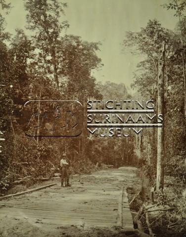 Weg door oerwoud | by Stichting Surinaams Museum