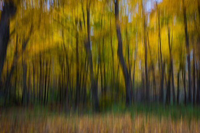 Autumn Abstract-3823