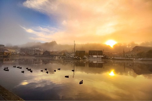 mist nature water fog sunrise harbor boat ducks thonhotelhalden