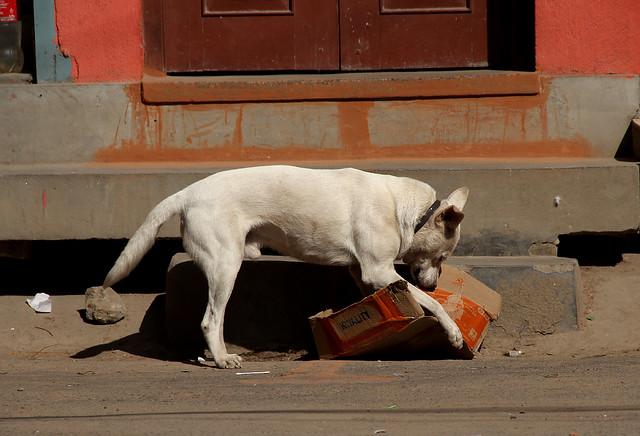 dogs in kathmandu