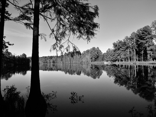 McDiarmid Millpond in Black and White