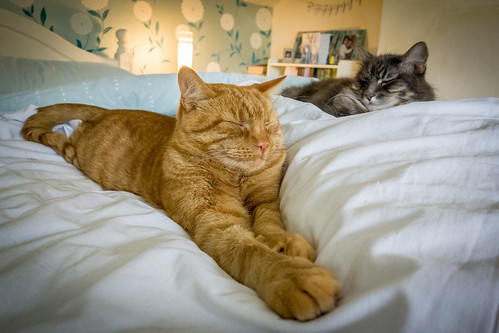 Let sleeping cats lie ... [Explored] | by James_Beard