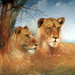 Murchison Falls Safari Park 2014