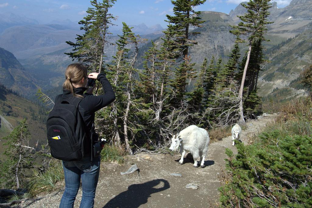Liz & mountain goat