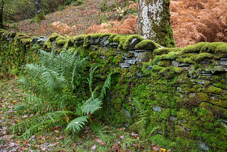 Mossy walls   by johnkaysleftleg