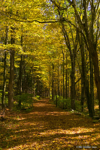 autumn fall connecticut ct foliage hampton goodwin sonyalphadslr sonyphotographing brownhillmarshtrail