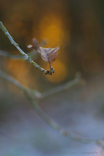 The last leaf on the tree.