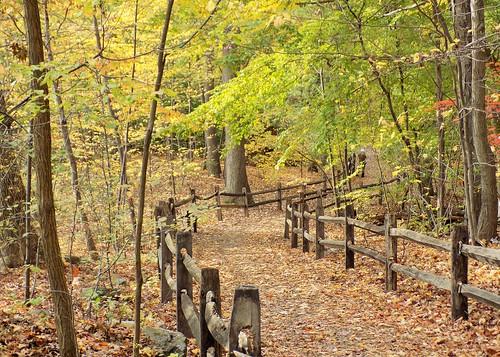 newyorkcity bronx nybg botanical garden thain family forest trees bäume foliage hff
