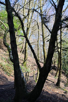 Leith Hill Windy Gap The Climb