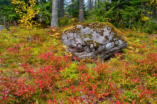 forest metsä autumn colors landscape suomi syksy metsämaisema rocks wood maisema stone views d3200 nikond3200 europe