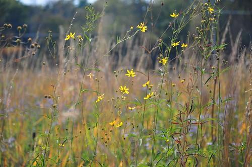 flowers autumn fall nature field grass season meadow explore change grasses wildflowers prairie 91 tallgrass oct82014