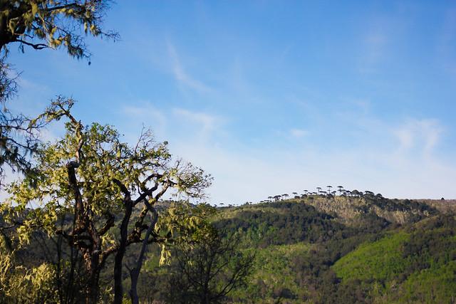 Cordillera Nahuelbuta