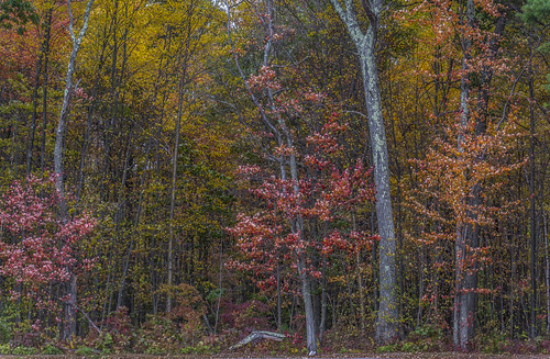 autumn connecticut originalnef staffordsprings tamron18270 johnjmurphyiii foliage