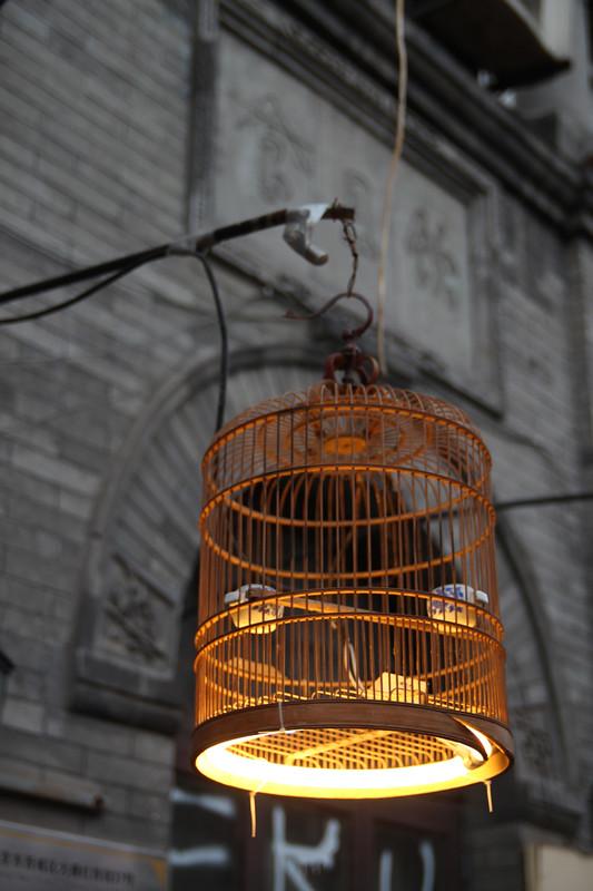 Birdcage  without bird
