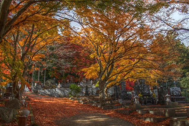 Autumn in Matsushima, Japan (HDR)
