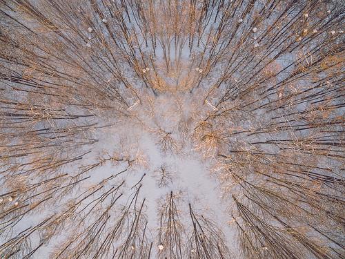 winter2016 snow white autumn 2016 europe djieurope baltic panevėžys lithuania lietuva drone aerial dronas aerialphotography dji djiphantom3 phantom phantom3 phantom3advanced advanced birdseye landscape djiglobal