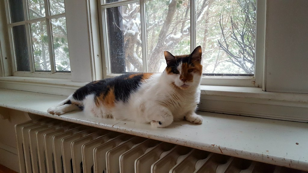 Astonishing Window Seat Right Over The Radiator Lorianne Disabato Flickr Unemploymentrelief Wooden Chair Designs For Living Room Unemploymentrelieforg
