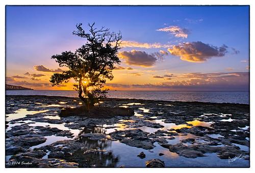 sunrise keys florida lagoon atlantic fl mangroves atlanticocean beech floridakeys sankar slowshutterspeed deepbay sankarraman msankar sankarramanphotography bhahiahonda bhahiahondakey bhahiahondastatepark