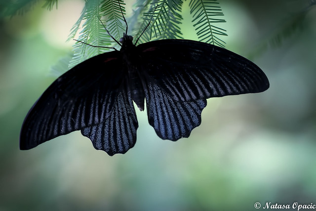 Just When The Caterpillar Thought The World Was Over, It Became A Butterfly