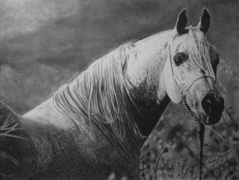 Desenhos Realista Cavalo Pintado Carlos Damasceno Flickr
