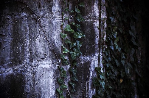 light shadow white detail green chattanooga leaves stone flickr tn tennessee gray ivy vine sharp faded granite bluffviewartdistrict