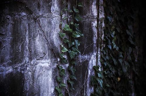 light shadow white detail green chattanooga leaves stone flickr tn tennessee gray ivy vine sharp faded granite bluffviewartdistrict